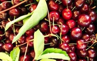 8 frutti di stagione per la spesa di giugno