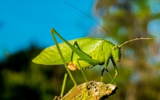 L'approdo degli insetti sulla tavola degli...