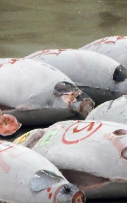 Giappone | Il mercato del pesce di Tsukiji