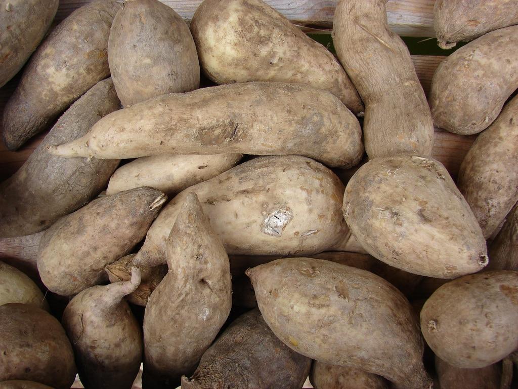 La batata, ossia la patata americana
