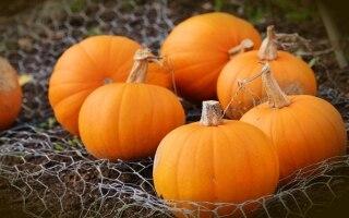 18 verdure di stagione per il mese di ottobre