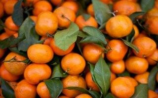 6 frutti di stagione per la spesa di gennaio