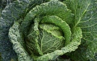 9 verdure di stagione per la spesa di gennaio