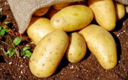 19 verdure di stagione per la spesa di settembre