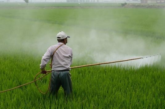 Glifosato: 5 cose da sapere sul diserbante più usato in agricoltura. I rischi per la salute e come evitarli