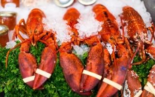 UK vicino al divieto di cottura delle aragoste vive. Crostacei e molluschi fra gli animali senzienti