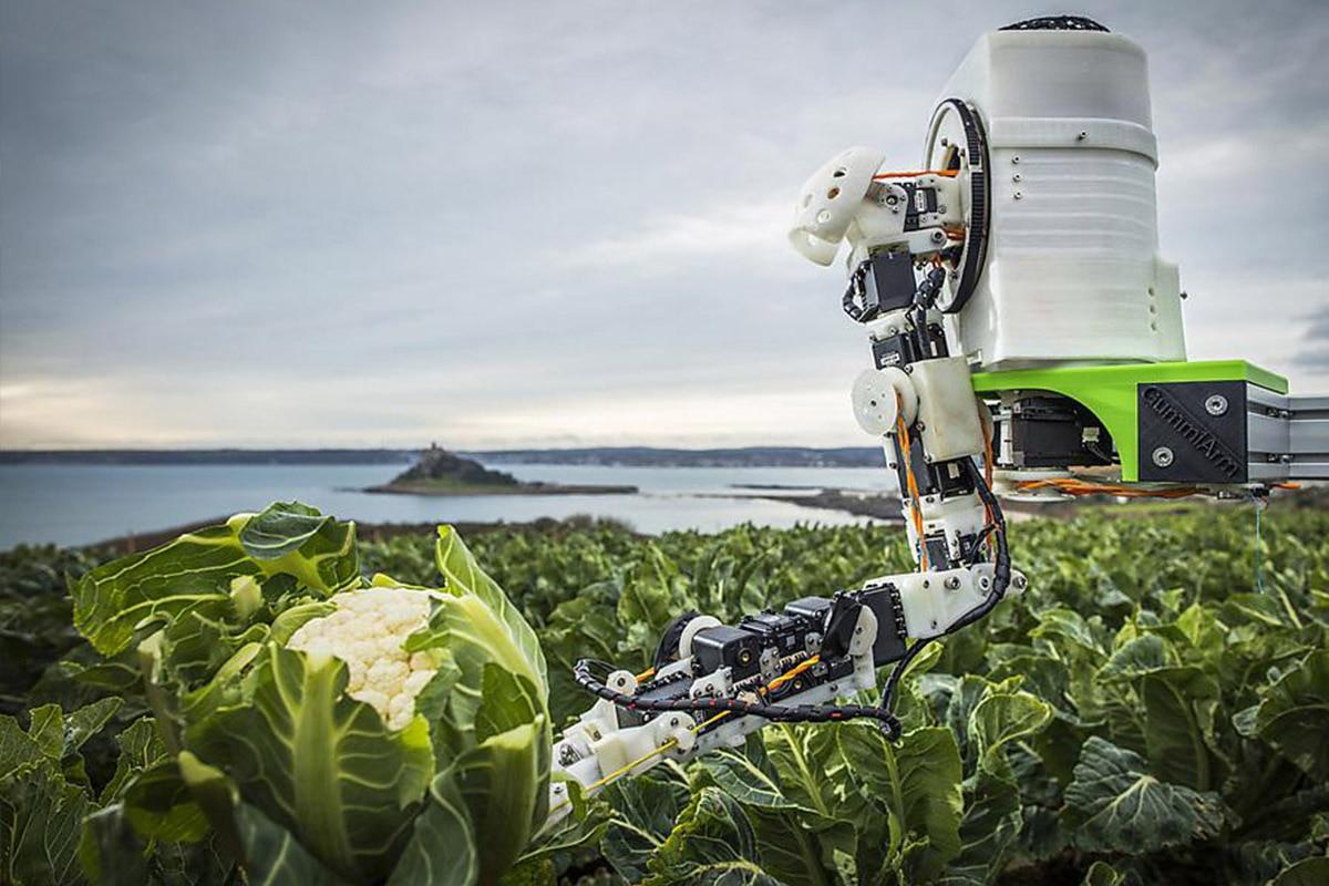 Robot, intelligenze artificiali e semi smart aiuteranno i contadini a coltivare il cibo del futuro