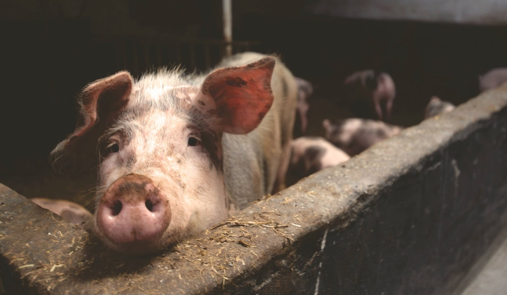 Il problema della produzione della carne e il coronavirus