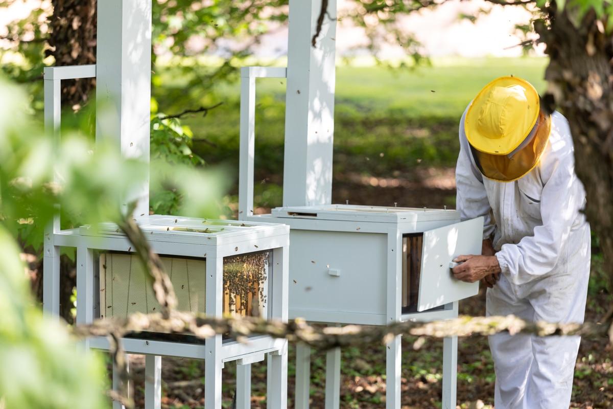 Le api del Cucchiaio d'Argento: ecco perché abbiamo 80.000 nuove amiche