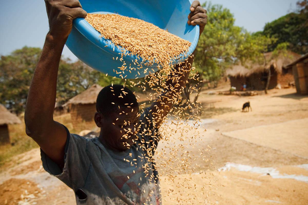 Appuntamento il 23 settembre a New York con il Summit FAO per un cibo che inquini meno