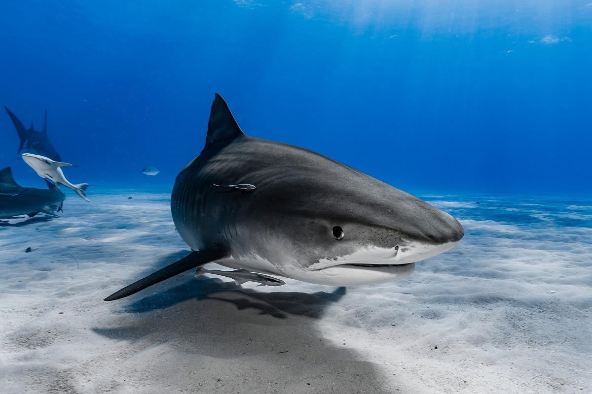 Dal congresso di Marsiglia, la Lista Rossa delle specie a rischio. Lo squalo non è messo bene