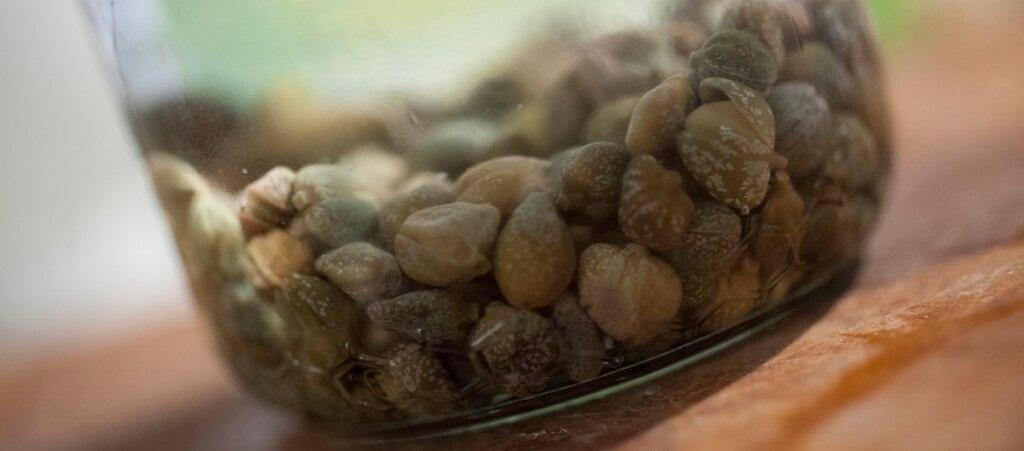 Polvere di capperi